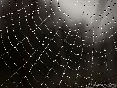 Spiderweb by Sam Pierson